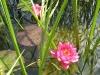 Seerose: Paul Weber - www.pixelio.de