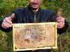 Bienenstock - © Prinzessinnengärten